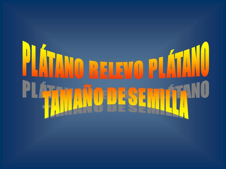 PLÁTANO RELEVO PLÁTANO