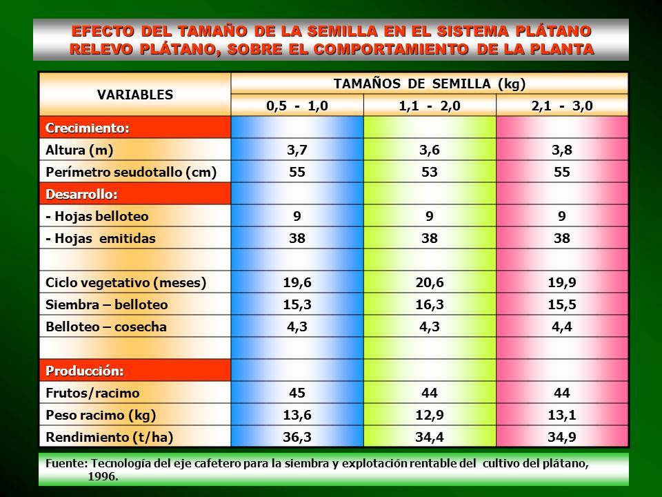 TAMAÑOS DE SEMILLA (kg)