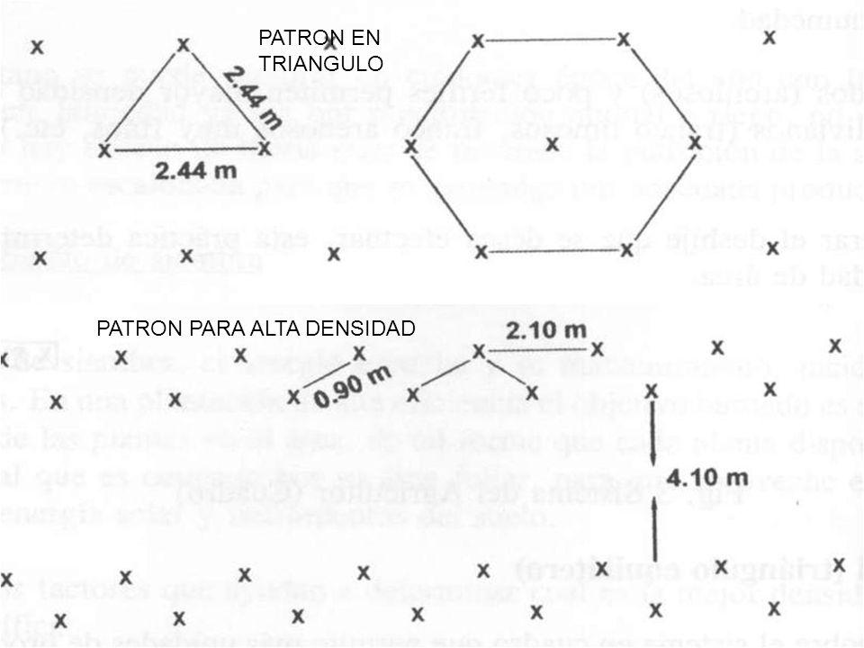 PATRON EN TRIANGULO PATRON PARA ALTA DENSIDAD