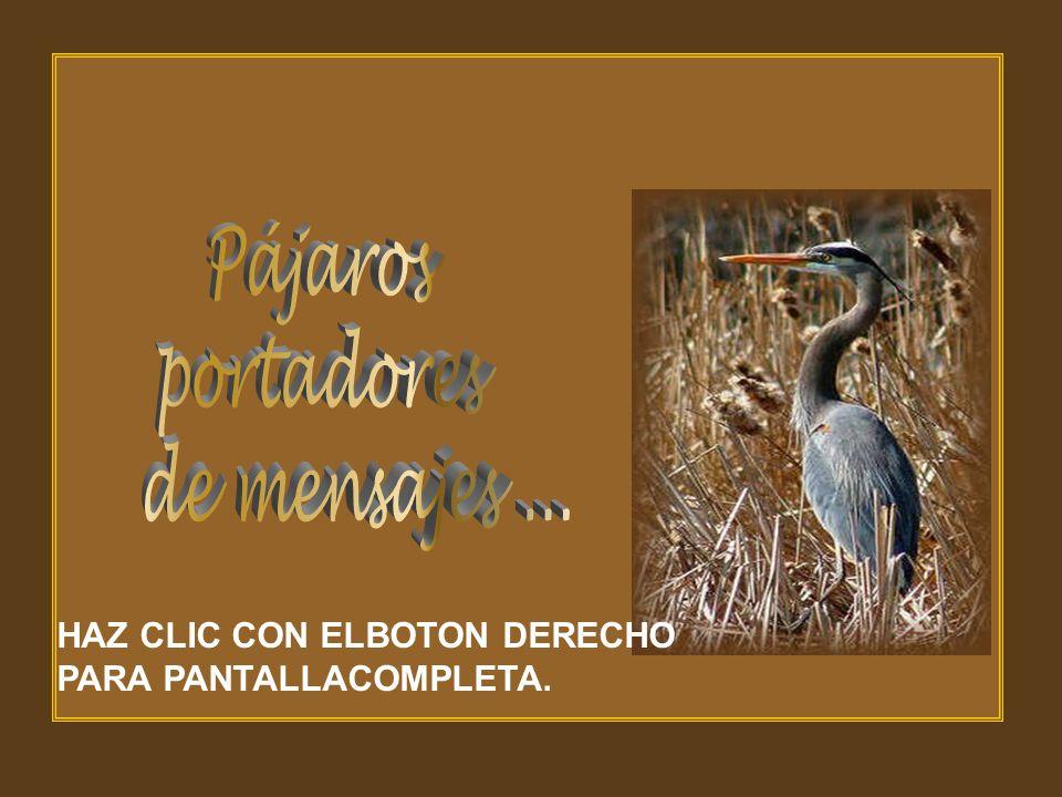 Pájaros portadores de mensajes ... HAZ CLIC CON ELBOTON DERECHO