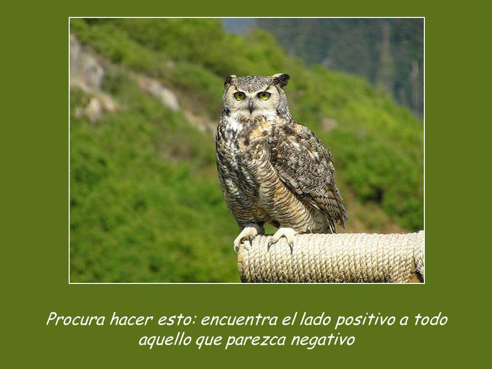 Procura hacer esto: encuentra el lado positivo a todo aquello que parezca negativo