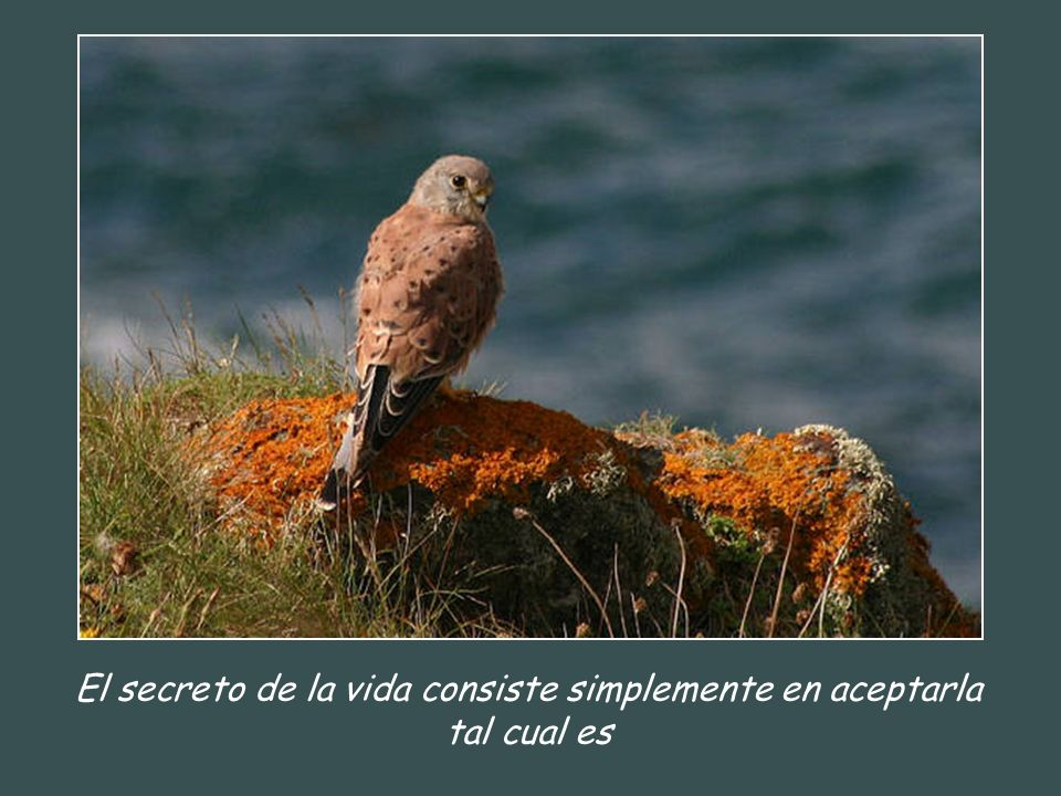 El secreto de la vida consiste simplemente en aceptarla tal cual es