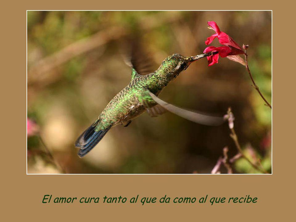 El amor cura tanto al que da como al que recibe