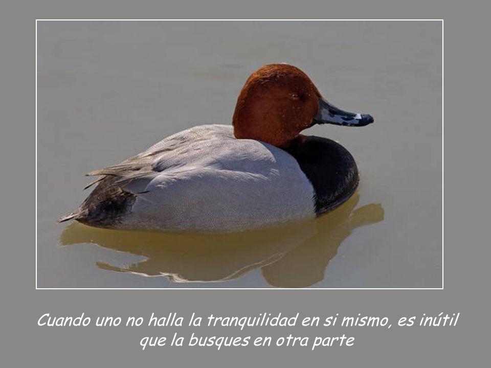 Cuando uno no halla la tranquilidad en si mismo, es inútil que la busques en otra parte