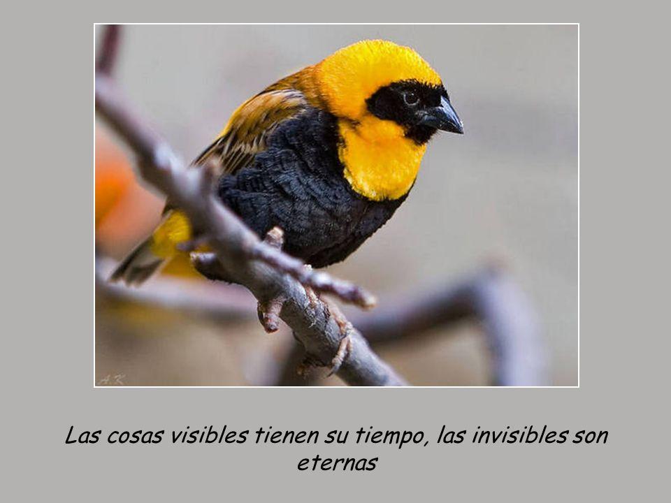 Las cosas visibles tienen su tiempo, las invisibles son eternas