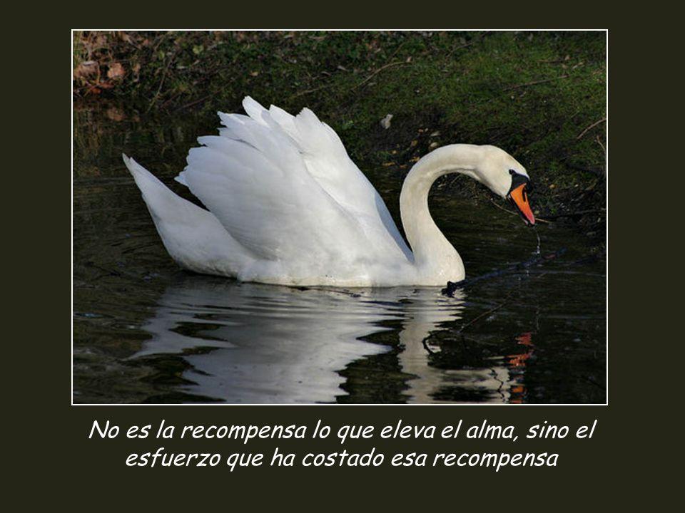 No es la recompensa lo que eleva el alma, sino el esfuerzo que ha costado esa recompensa