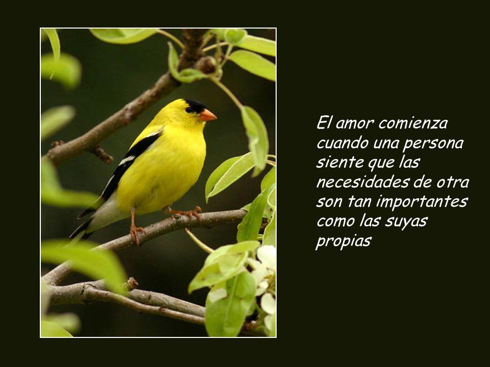 El amor comienza cuando una persona siente que las necesidades de otra son tan importantes como las suyas propias