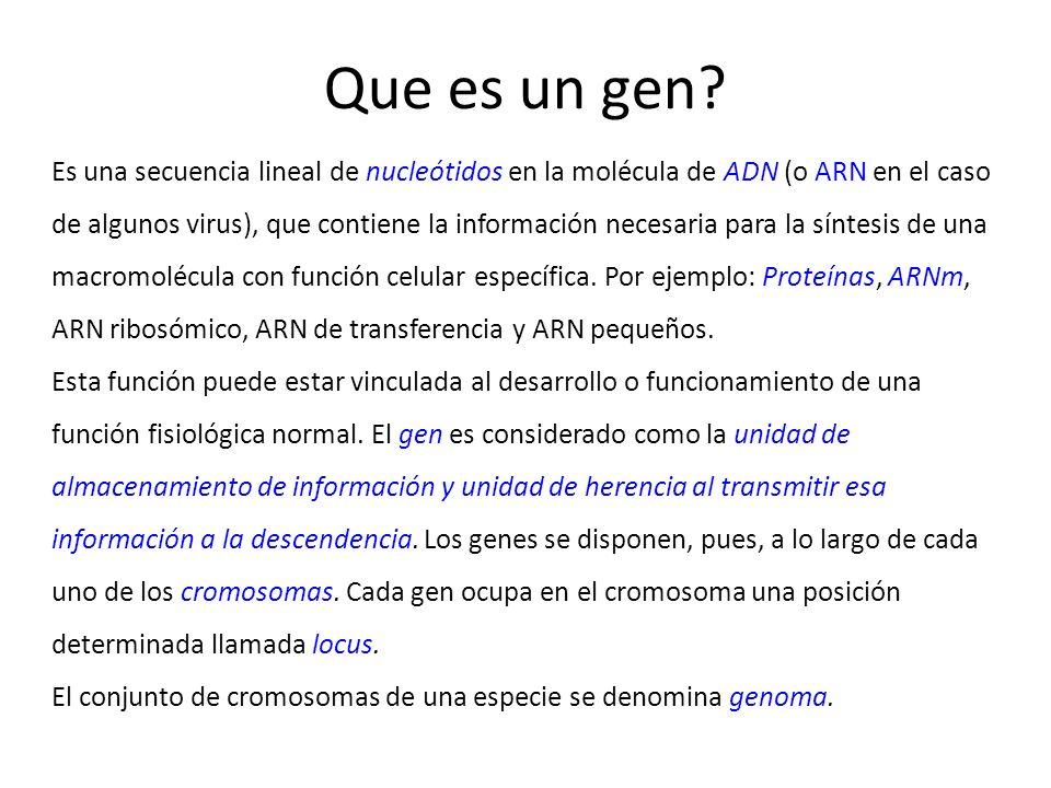 16/09/08 Que es un gen