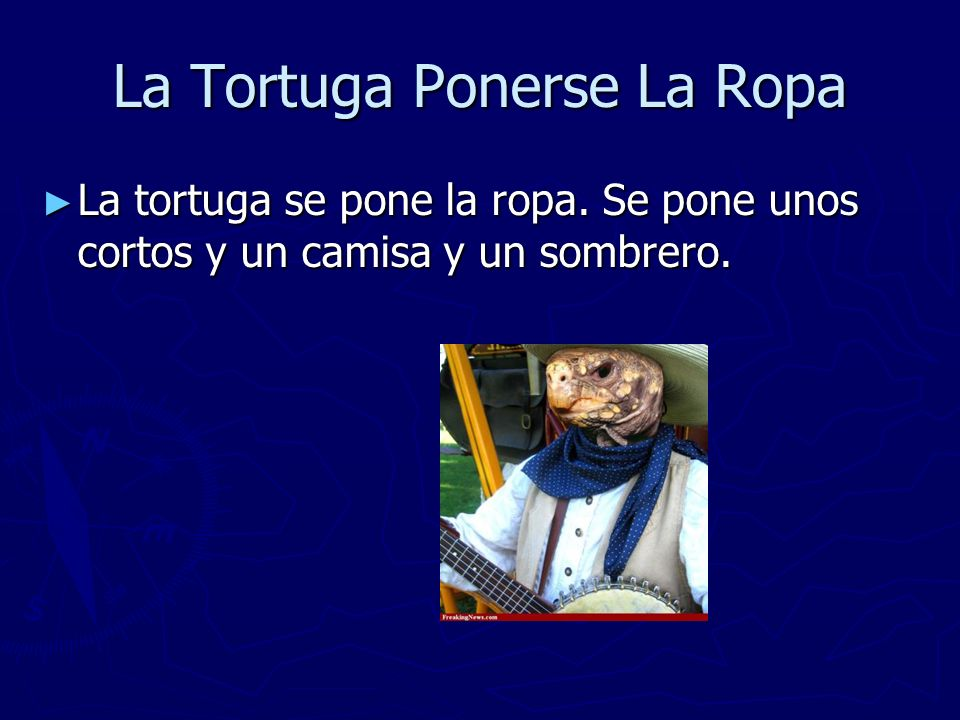 La Tortuga Ponerse La Ropa