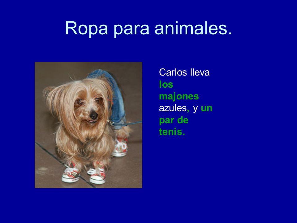 Ropa para animales. Carlos lleva los majones azules, y un par de tenis.
