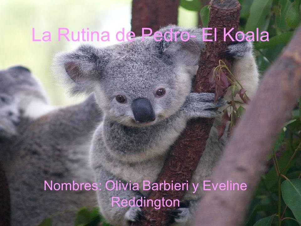La Rutina de Pedro- El Koala