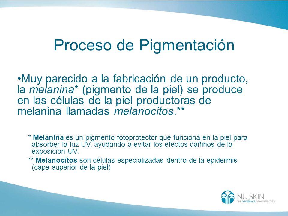 Proceso de Pigmentación