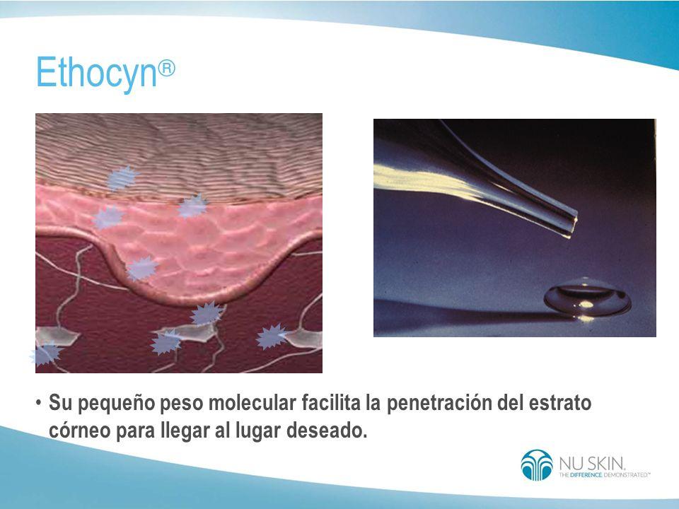 Ethocyn® Su pequeño peso molecular facilita la penetración del estrato córneo para llegar al lugar deseado.