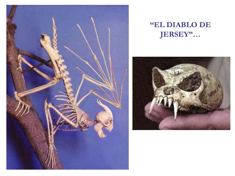 EL DIABLO DE JERSEY …