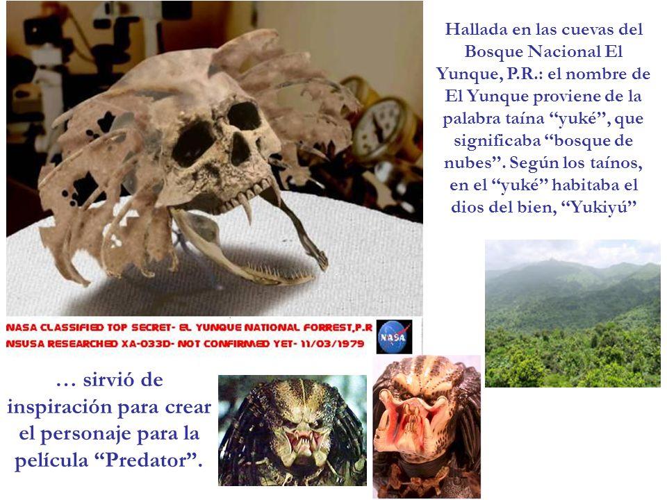 Hallada en las cuevas del Bosque Nacional El Yunque, P. R