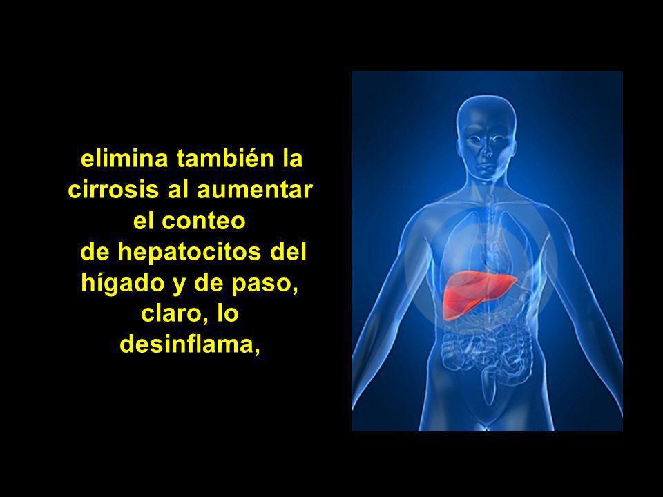 elimina también la cirrosis al aumentar el conteo de hepatocitos del hígado y de paso, claro, lo desinflama,