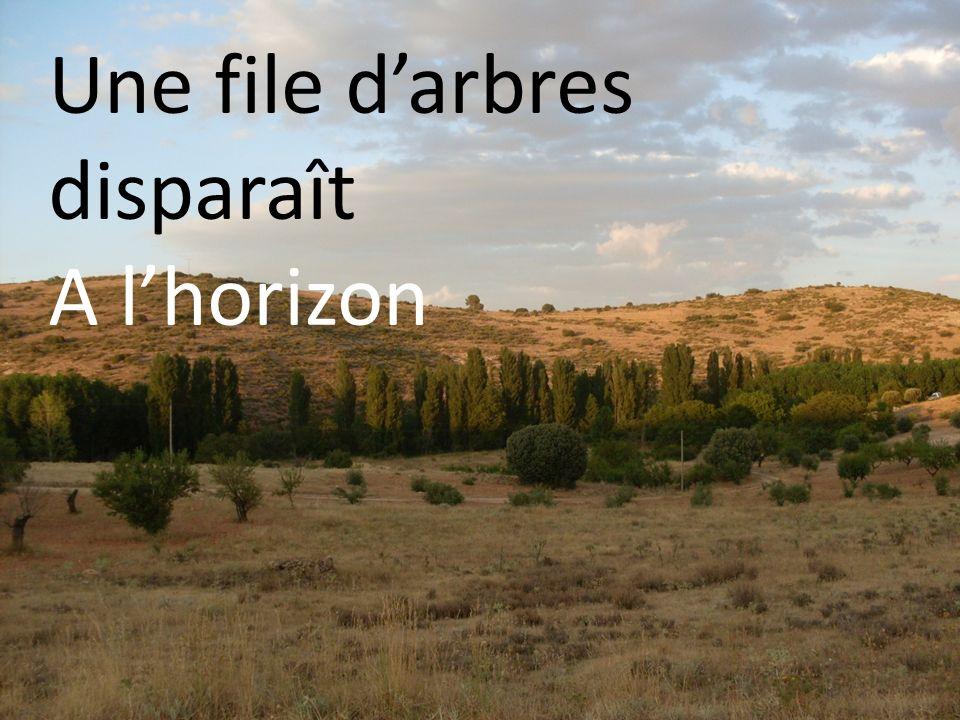 Une file d'arbres disparaît A l'horizon
