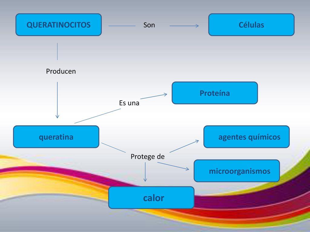 Fantástico Queratina Anatomía Definición Bandera - Anatomía de Las ...