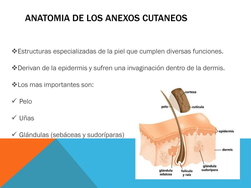 Encantador Grises Anatomía Epguide Regalo - Imágenes de Anatomía ...