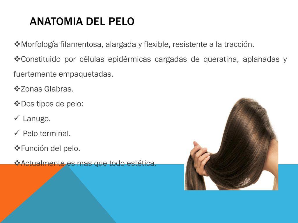 Definicion de pelo en anatomia – Destinos populares en España