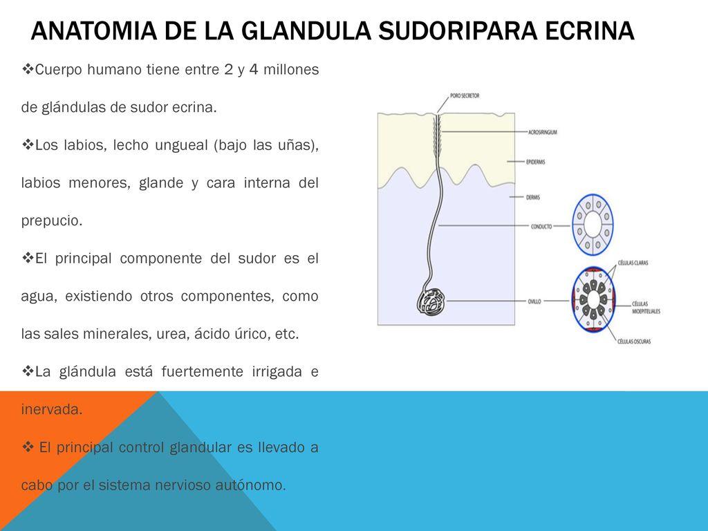 Increíble Fundamentos De La Anatomía Y Fisiología Humana Marieb Pdf ...