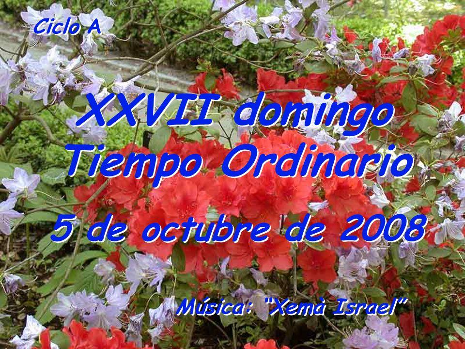 XXVII domingo Tiempo Ordinario
