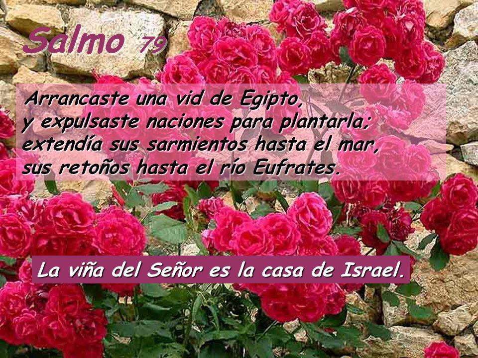 Salmo 79 La viña del Señor es la casa de Israel.