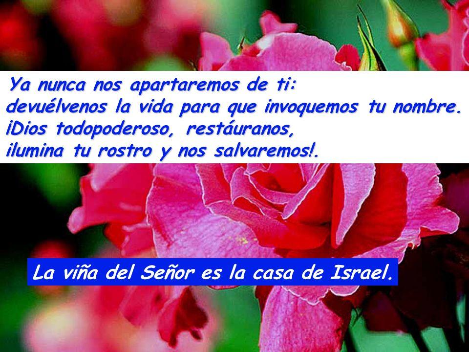La viña del Señor es la casa de Israel.