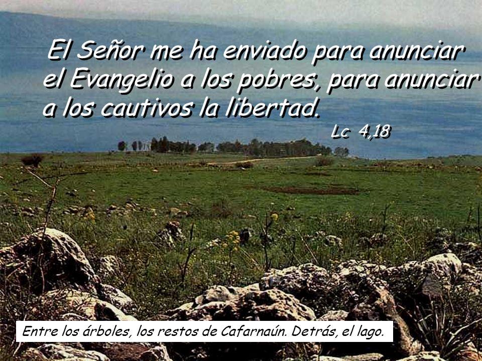 El Señor me ha enviado para anunciar el Evangelio a los pobres, para anunciar a los cautivos la libertad. Lc 4,18