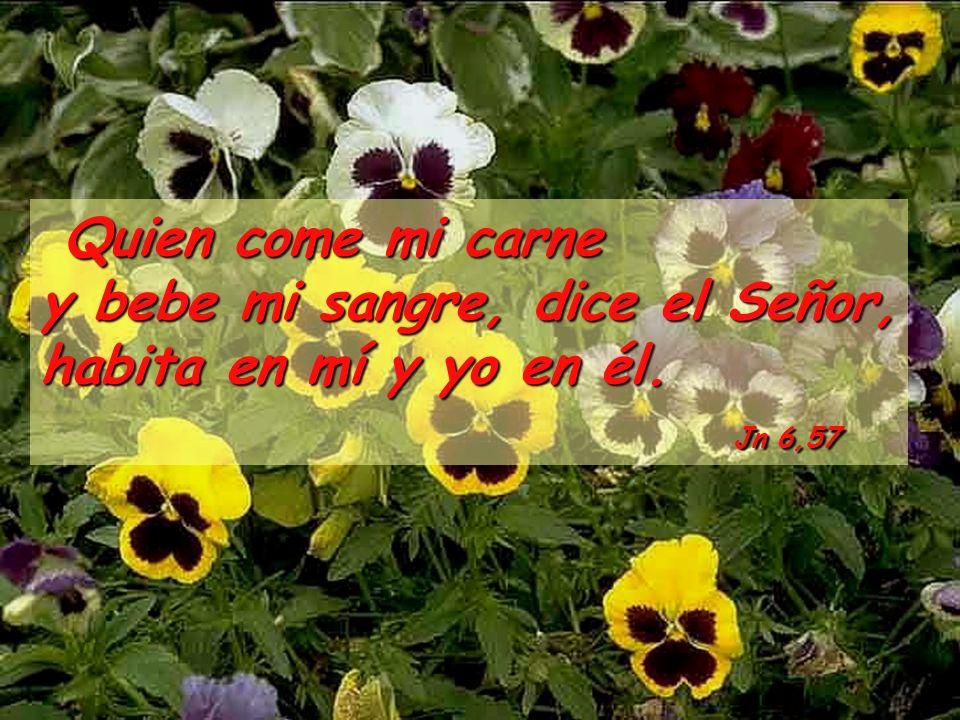 Quien come mi carne y bebe mi sangre, dice el Señor, habita en mí y yo en él.
