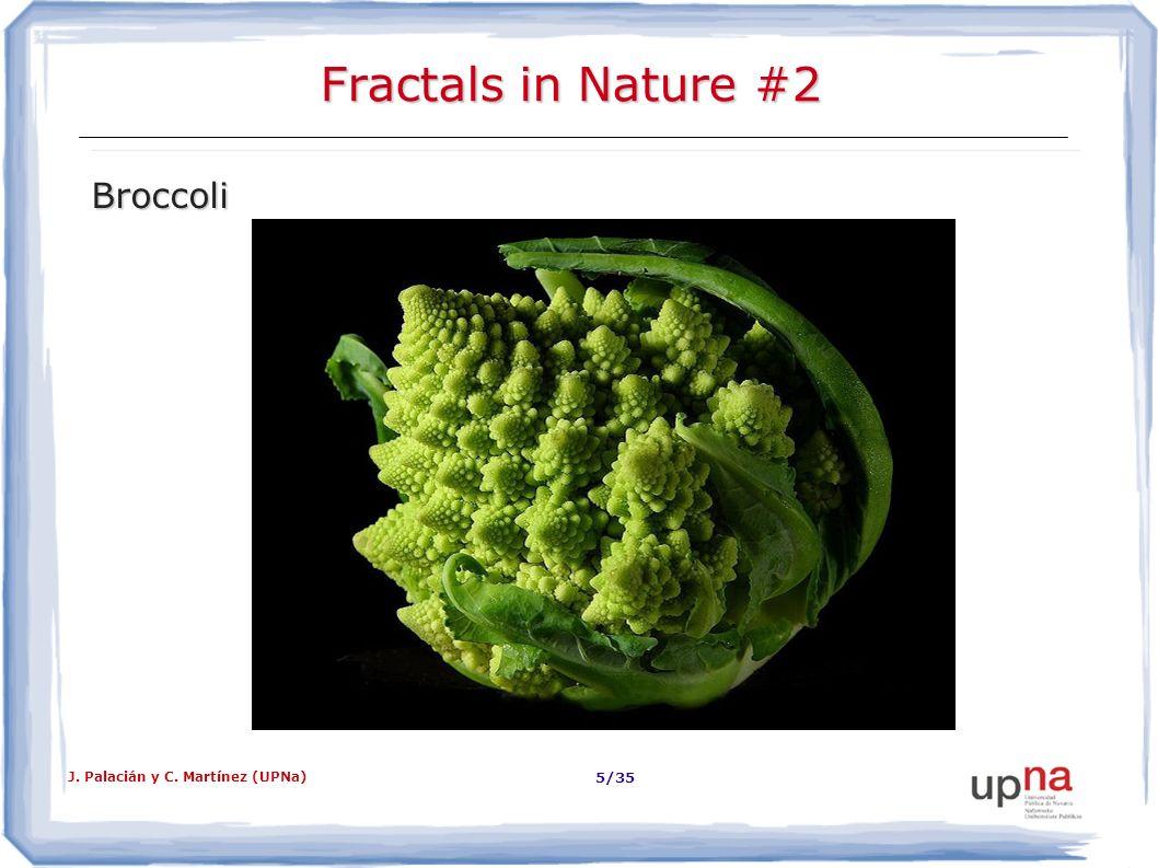 Fractals in Nature #2 Broccoli J. Palacián y C. Martínez (UPNa)