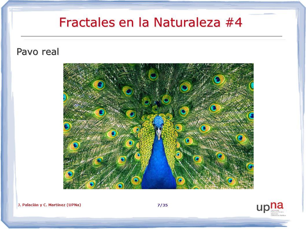 Fractales en la Naturaleza #4