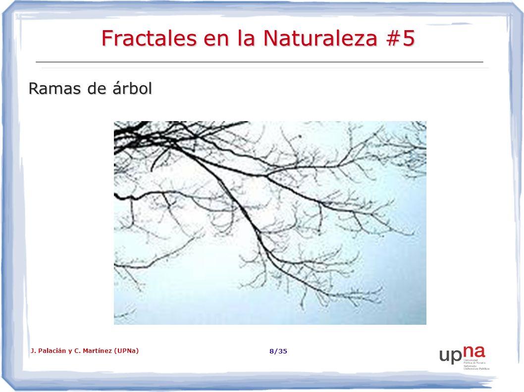 Fractales en la Naturaleza #5