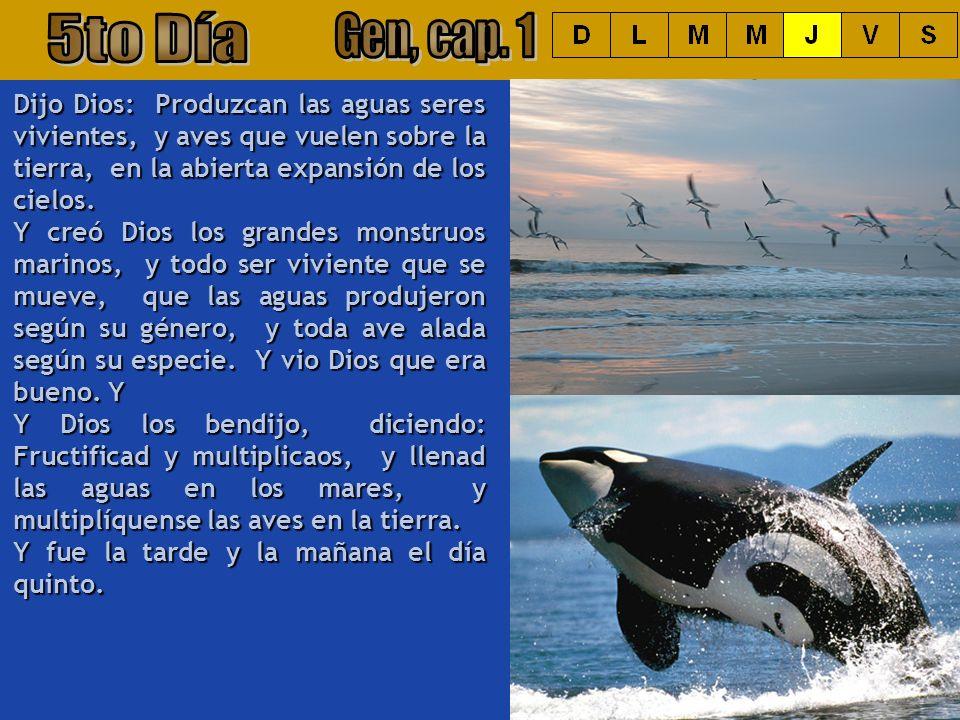 5to Día Gen, cap. 1. Dijo Dios: Produzcan las aguas seres vivientes, y aves que vuelen sobre la tierra, en la abierta expansión de los cielos.