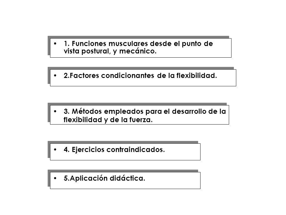 1. Funciones musculares desde el punto de vista postural, y mecánico.