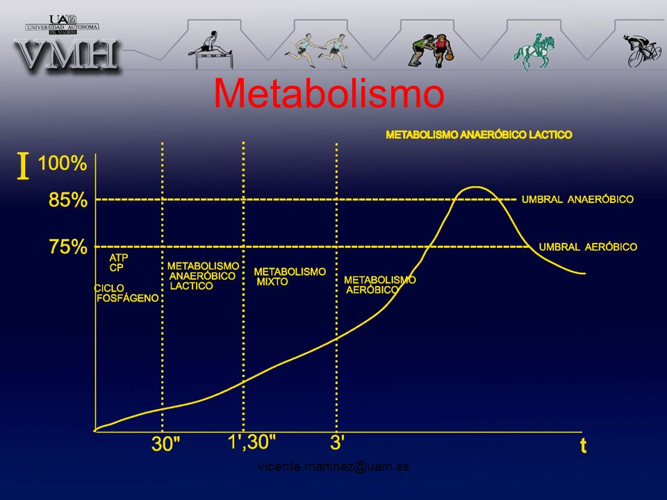 Metabolismo vicente.martinez@uam.es