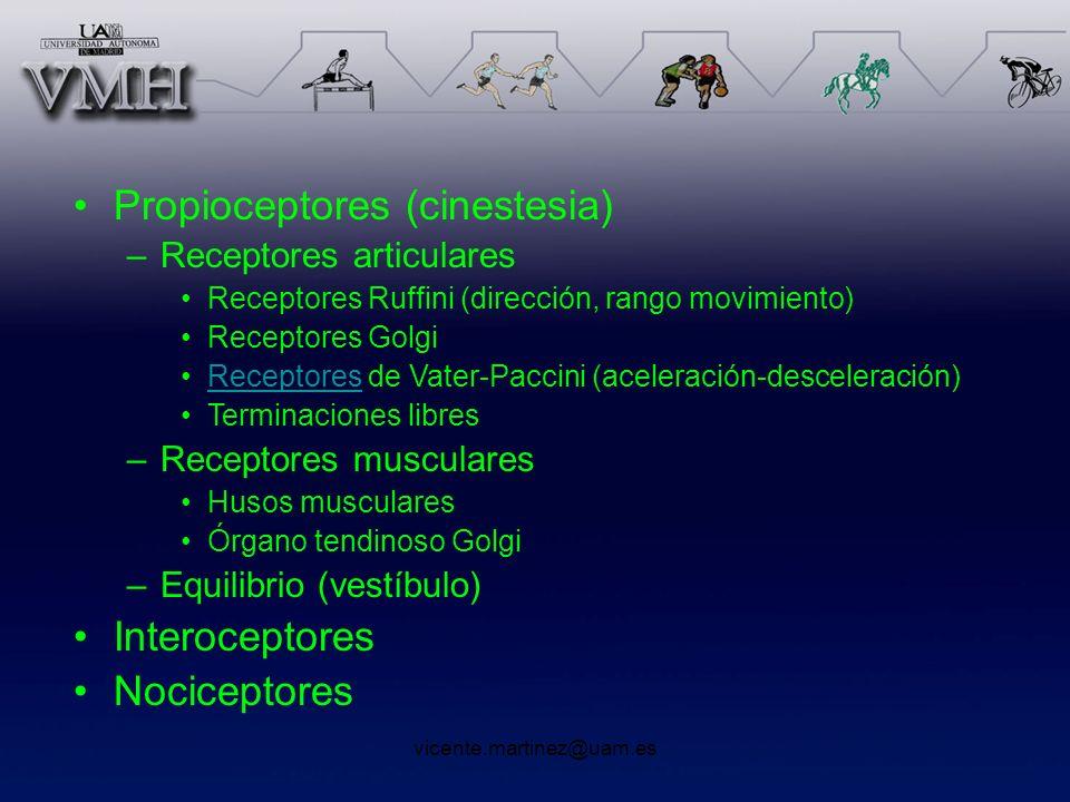 Propioceptores (cinestesia)