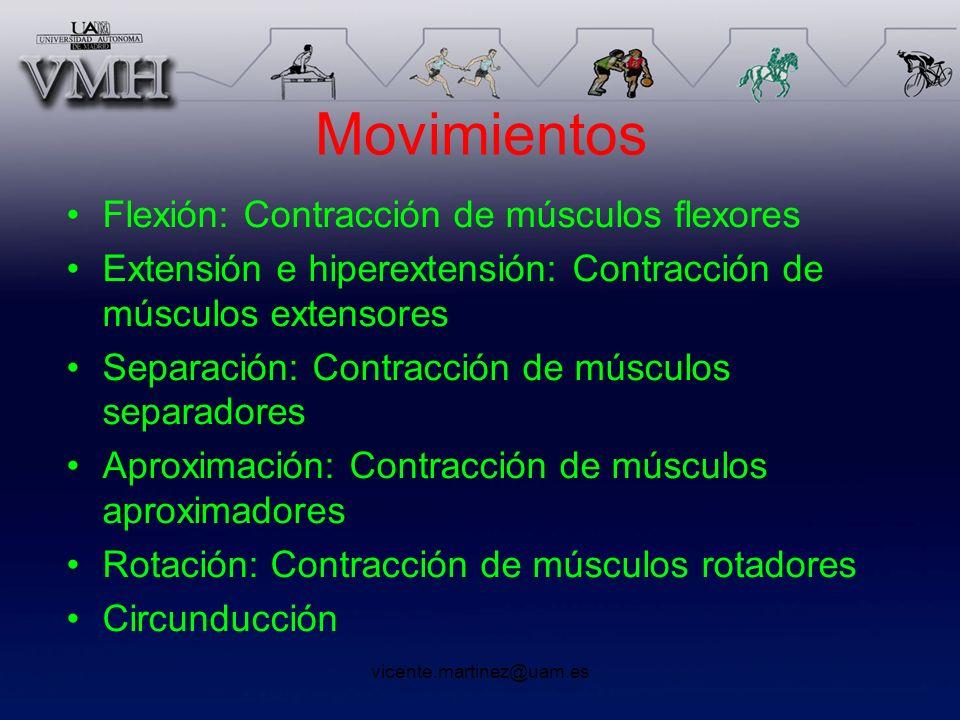 Movimientos Flexión: Contracción de músculos flexores