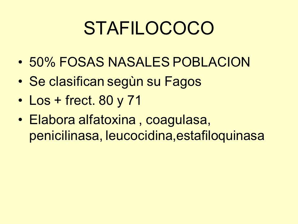 STAFILOCOCO 50% FOSAS NASALES POBLACION Se clasifican segùn su Fagos
