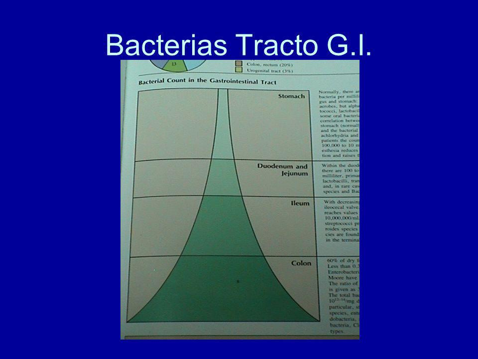 Bacterias Tracto G.I.