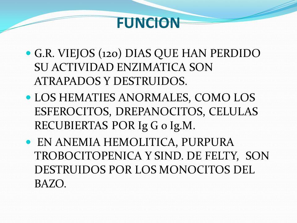 FUNCION G.R. VIEJOS (120) DIAS QUE HAN PERDIDO SU ACTIVIDAD ENZIMATICA SON ATRAPADOS Y DESTRUIDOS.
