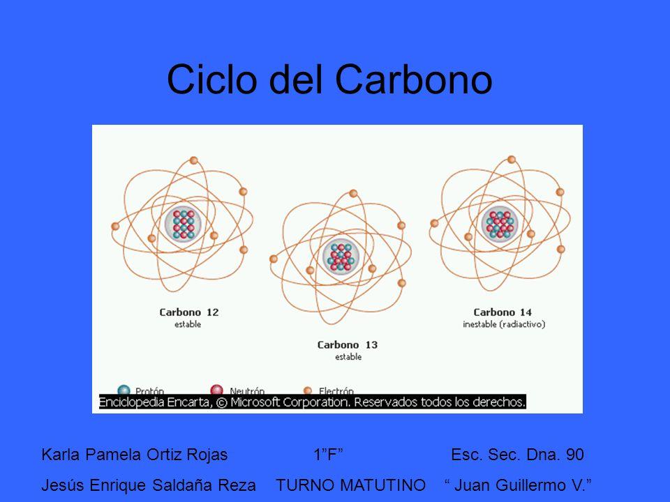 Ciclo del Carbono Karla Pamela Ortiz Rojas 1 F Esc. Sec. Dna. 90