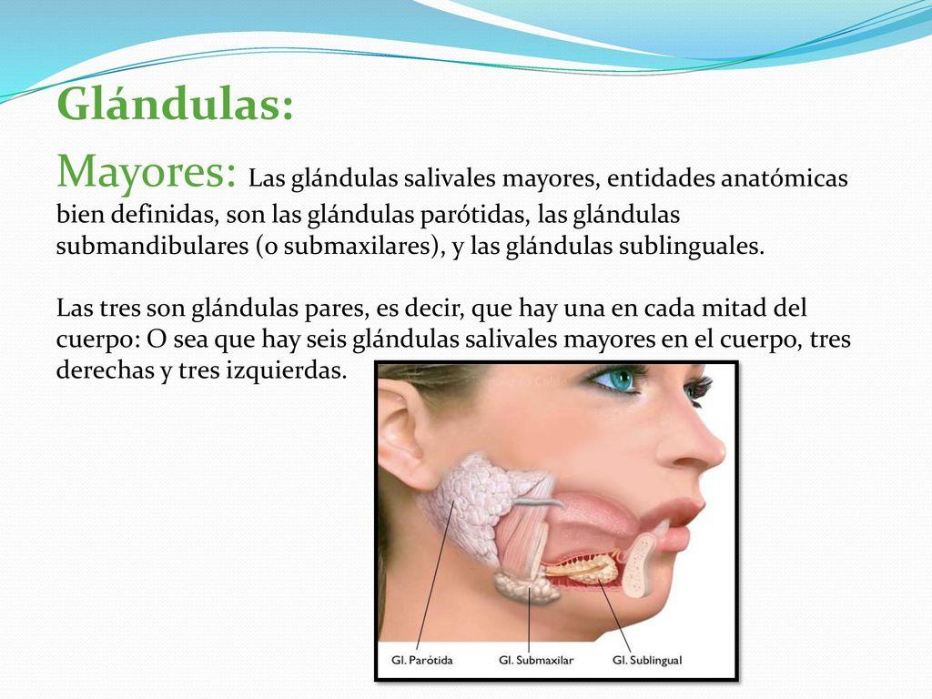 Perfecto Anatomía Quirúrgica De La Glándula Parótida Imágenes ...