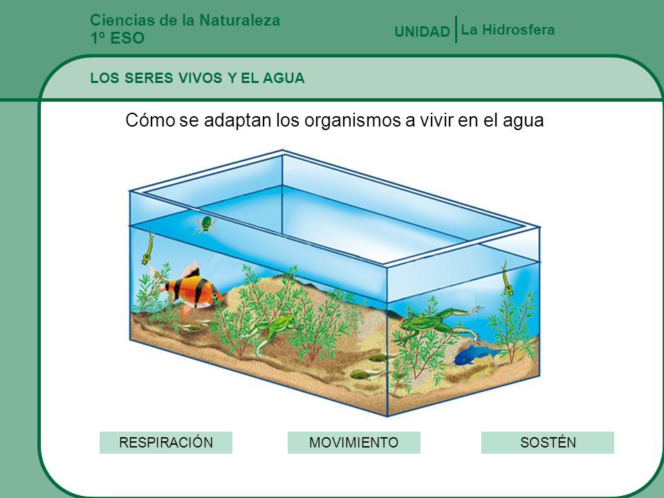 Cómo se adaptan los organismos a vivir en el agua