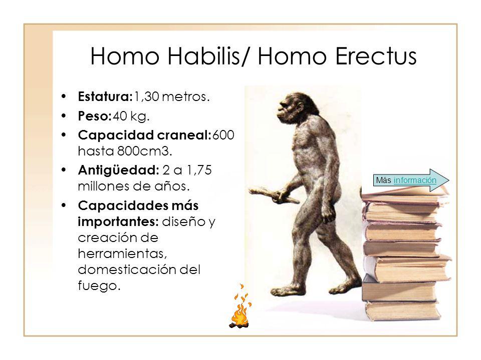 Homo Habilis/ Homo Erectus
