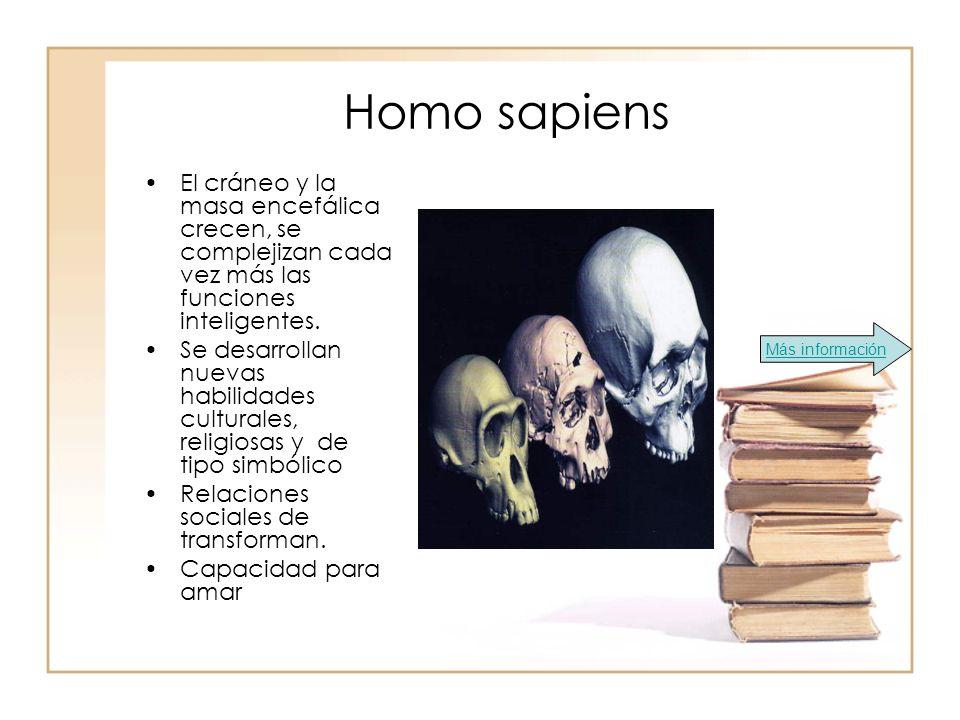 Homo sapiens El cráneo y la masa encefálica crecen, se complejizan cada vez más las funciones inteligentes.