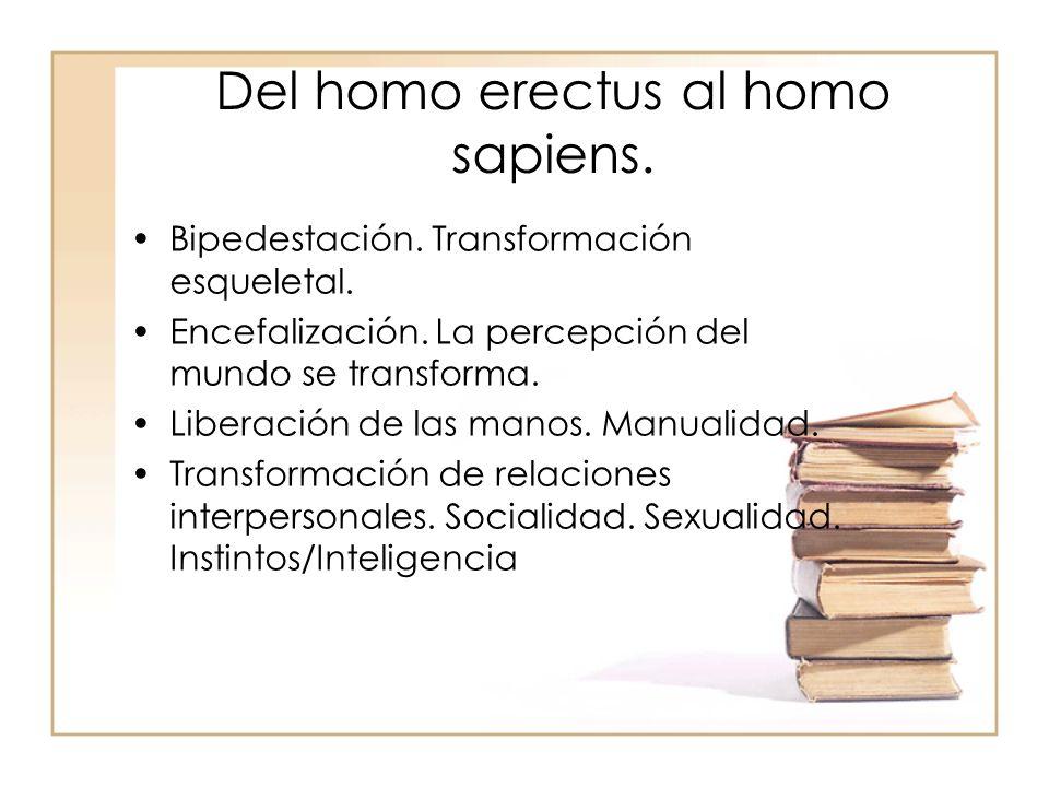 Del homo erectus al homo sapiens.