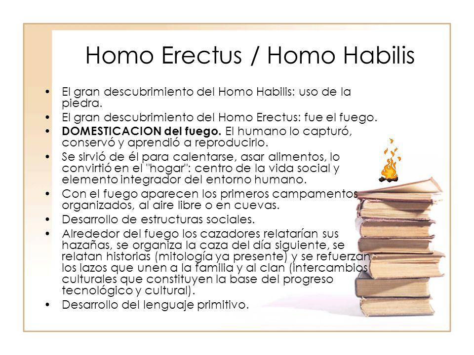Homo Erectus / Homo Habilis