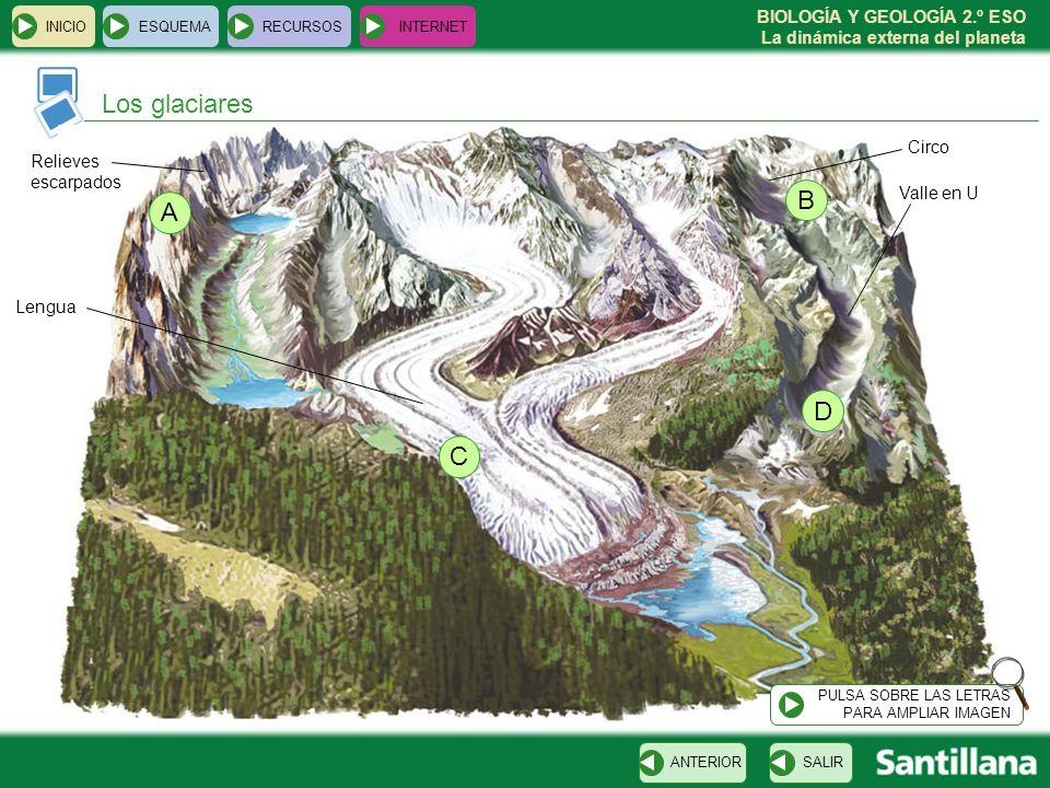 Los glaciares B A D C Circo Relieves escarpados Valle en U Lengua