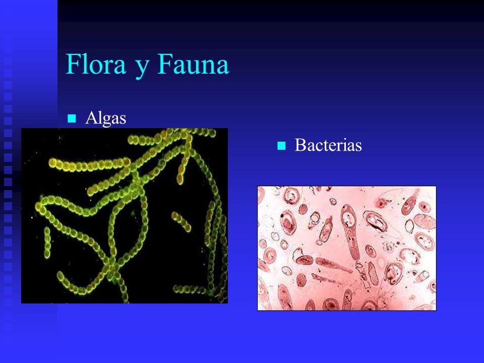 Flora y Fauna Algas Bacterias